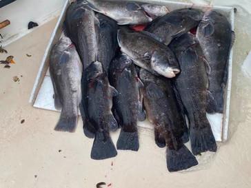Nov 14 Fishing Report