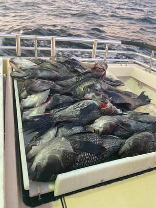 Aug 20 Twilight Fishing
