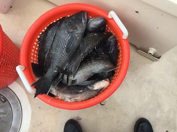 Nov 10- Fishing Report