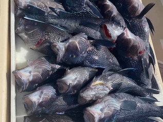 Sept 3 Fishing Report
