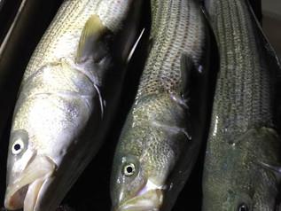 Sept 8 Fishing Report