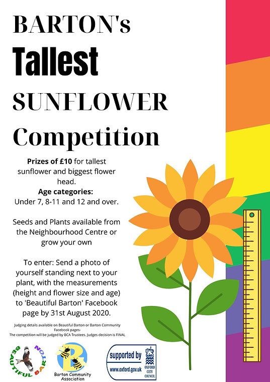 sunflower comp.jpg