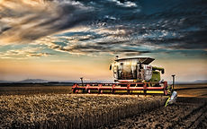 claas-lexion-670-wheat-harvest-2019-comb