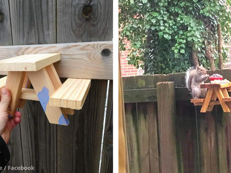 Someone Made a Squirrel Picnic Table and It's the Funniest Thing We've Seen 🐿