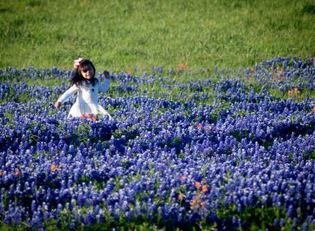 The Top 3 Bluebonnet Spots in Texas
