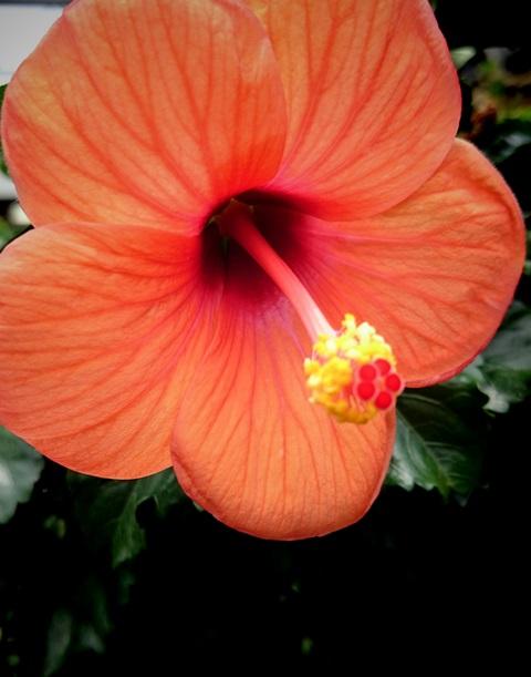 沖縄北谷琉球シーサイドアロマサロン蜜月