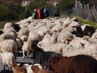 Aux Lucioles, on n'est pas des moutons !