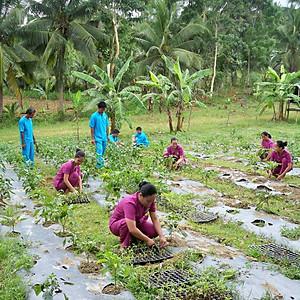 Farming Programs