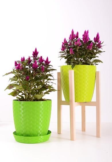Vases verts