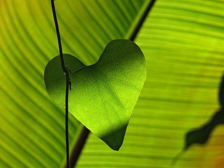 «Green Therapy» ou «Thérapie Verte»: une reconnexion avec la nature!