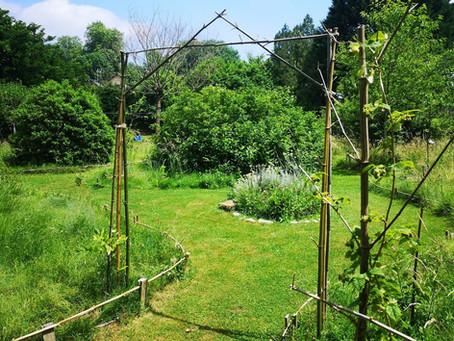 Favoriser la biodiversité avec une tonte écolo et à moindre effort? Lâchez-prise dans votre jardin!