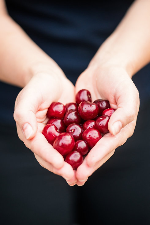 A close up of a person's hands holding cherries