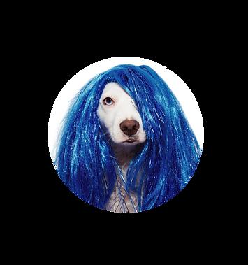 purim_pet_parade_dog.png