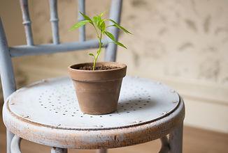 plant_pixabay.jpg