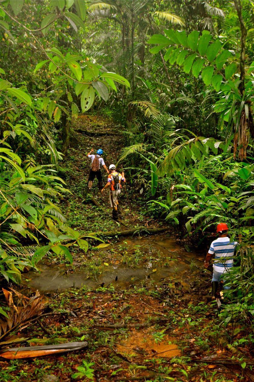 conservación_bosque