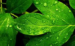 hojas-verdes_08