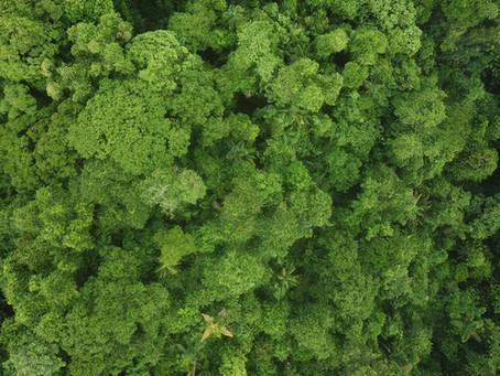 FUNDECOR Y FONAFIFO lanzan proyecto piloto para potenciar la reforestación en Costa Rica
