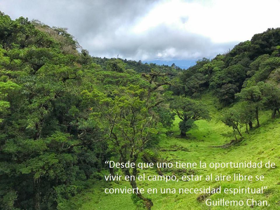 Hondonada verde