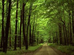 Camino del Bosque-36497_800