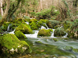 rio-de-agua-clara-pasando-por-las-rocas-cubiertas-de-musgo
