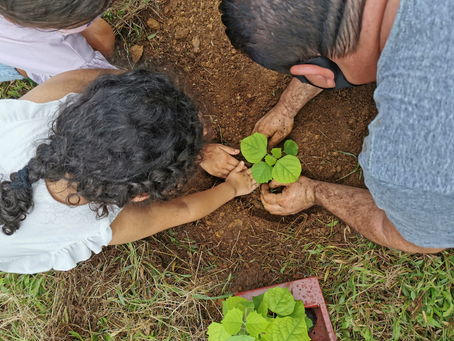 Arranca Plan Piloto de Reforestación en La Gata de Sarapiquí