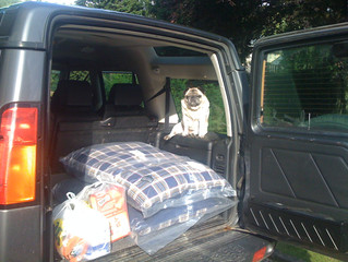 Travel tips for taking your dog on holiday