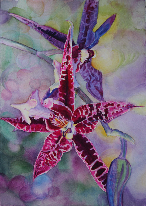 """""""Spider Spider"""" , 14x18"""" Watercolor on paper."""