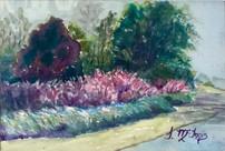Purple Fountain Grass 8x10 Watercolor