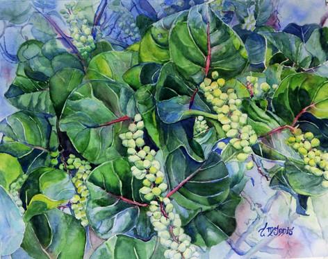 """Sea Grapes"" , 24x20"" Watercolor on paper."