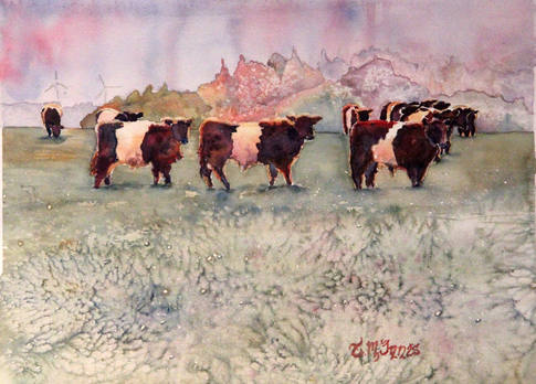 """""""Belted Galloway"""" , 15x19"""" Watercolor on paper."""
