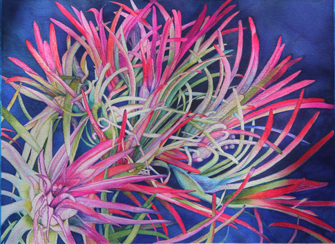 """""""Bromeliad Gone Wild"""", 25x34"""" Watercolor on paper."""