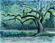 Windswept Oaks of Eden Watercolor 8x10