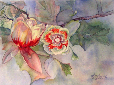 """Tulip Poplar""  16x20"" Watercolor on paper."