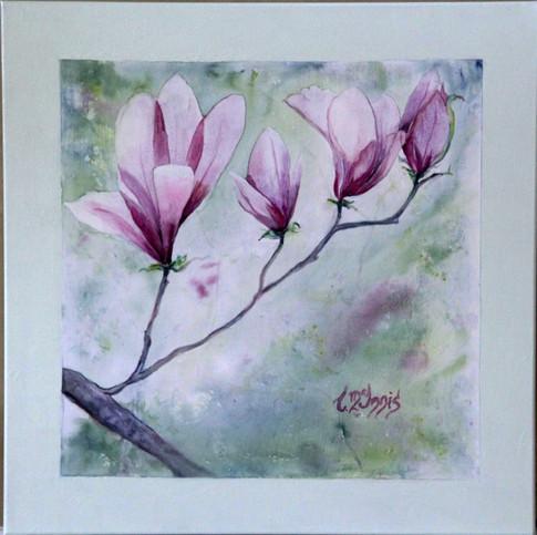 """""""Tulip Magnolia""""  24x24"""" Watercolor on paper."""