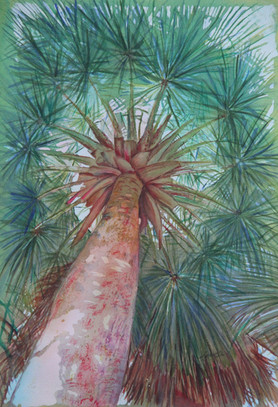 """""""Bailey Palm of Fairchild"""" , 21x26"""" and Watercolor on paper."""