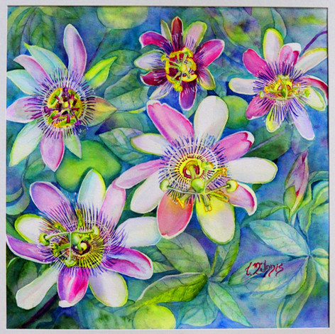 """""""Passion Flowers"""", 22x22"""" Watercolor on paper."""