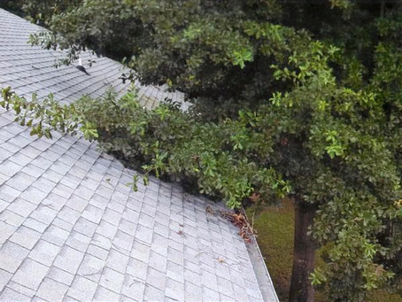 Roof Maintenance Tips Every Homeowner Should Follow