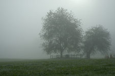 fog-farm-mist-cemetery-tree-wet-tombston