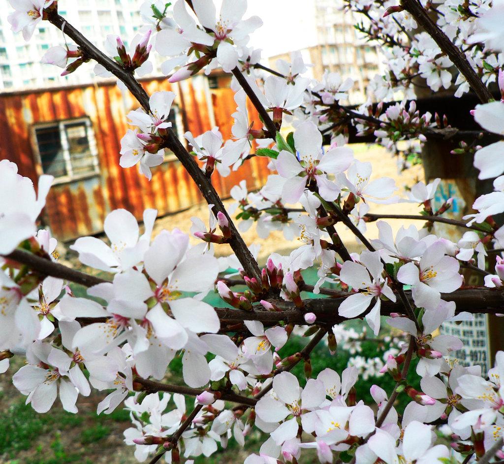 spring_by_blackmagdalena-d3f86w7