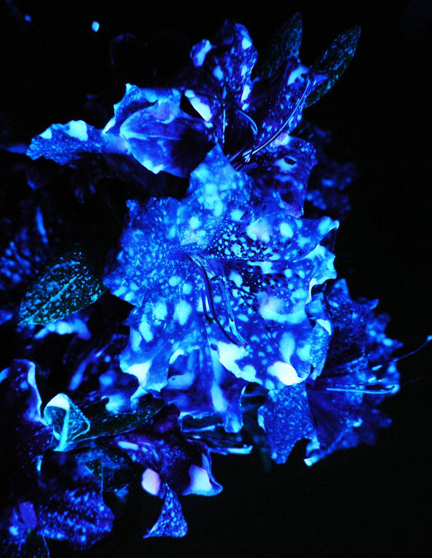 glow_stick_azaleas_by_blackmagdalena-d3g0qq5