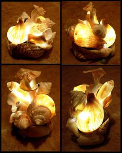 florida_shell_lamp_by_blackmagdalena-d4b9u1k