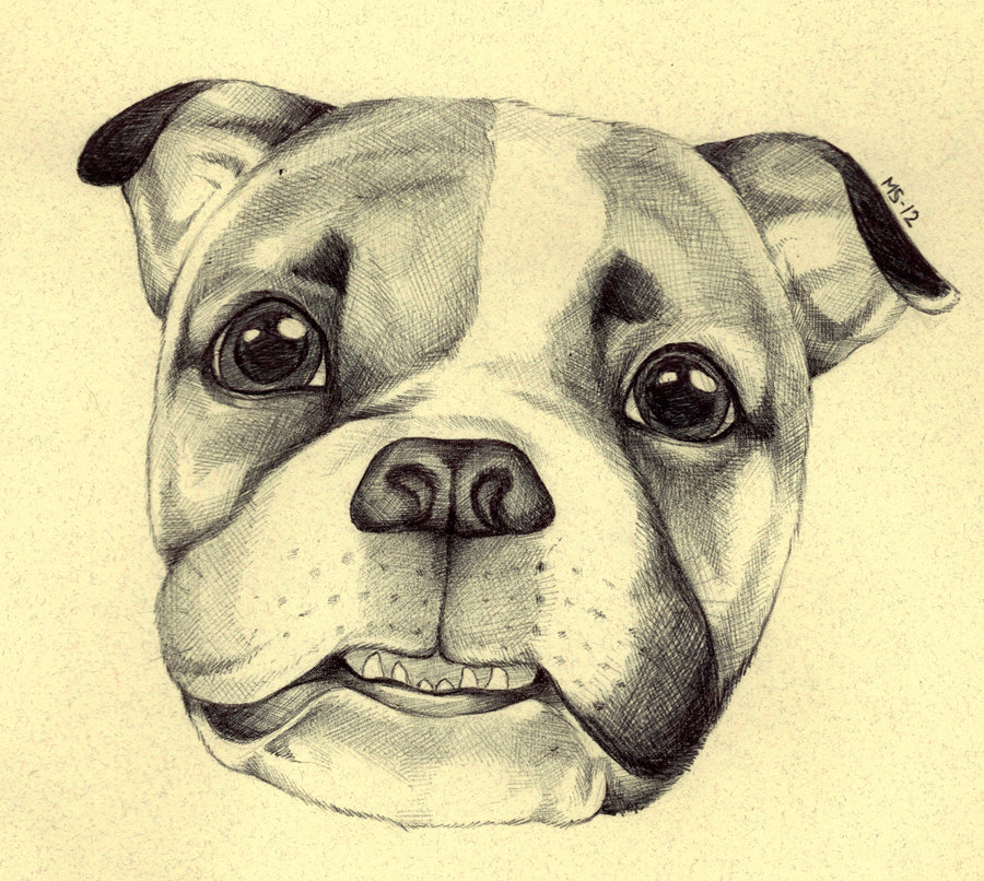gary_the_bulldog_by_blackmagdalena-d4m1egw