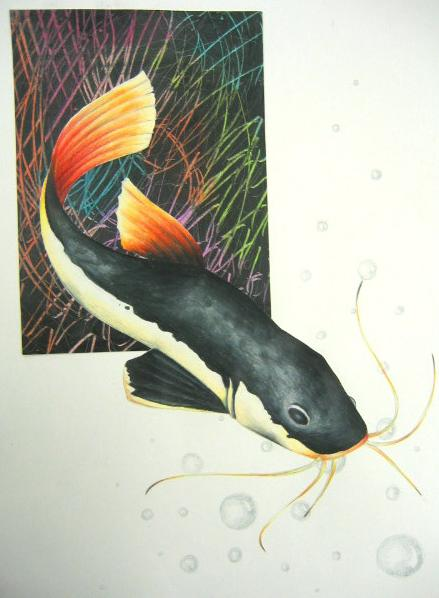red_tailed_catfish_by_blackmagdalena