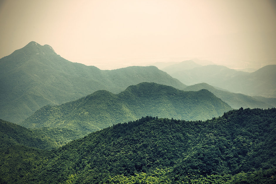 foret vert nature bien-être