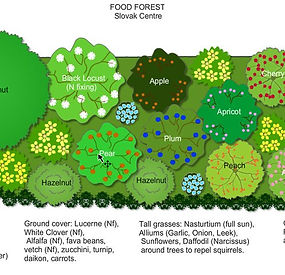 Slovak-Centre-Food-Forest-Design.jpg