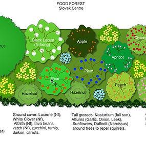 Slovak-Centre-Food-Forest-Design.jpg