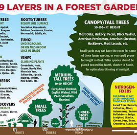 forestgarden-layers-revised-01.jpg