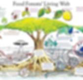 bosque-alimentos-mediterraneos.jpg
