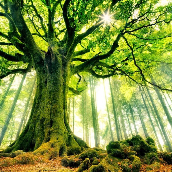 Intégrer la magie des 4 éléments et manifester sa puissance créatrice