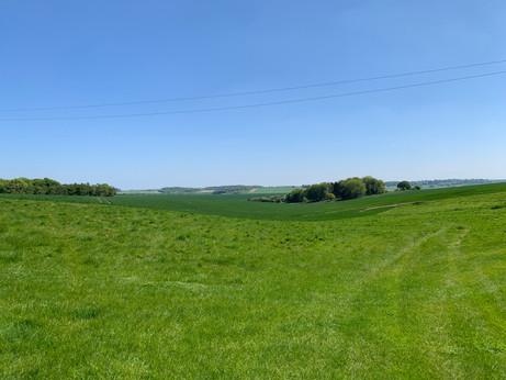 Luscious Pastures